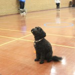 Dog Training Classes in Dowlais and Hirwaun
